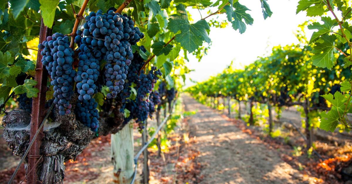 Napa Valley's Wine Industry