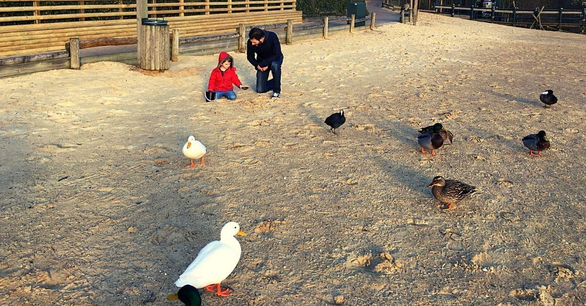 Center Parcs free activities - feeding the ducks